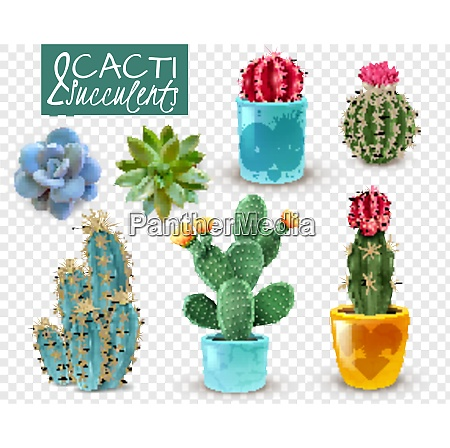 blooming cacti and popular succulents varieties