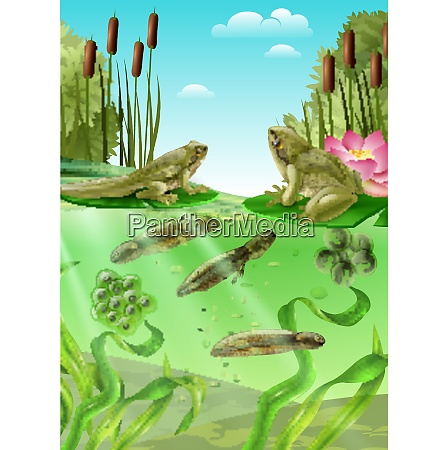frog life cycle water stages realistic