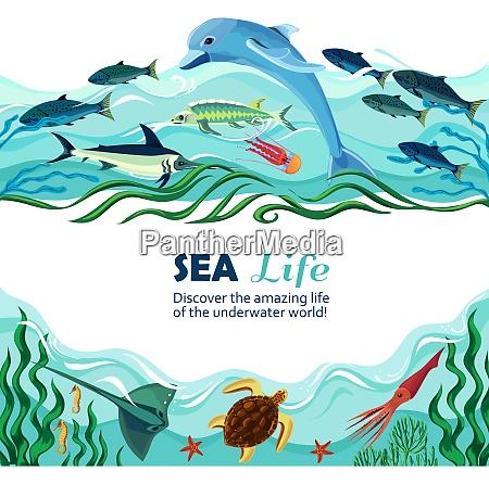 cartoon vector illustration of sea life