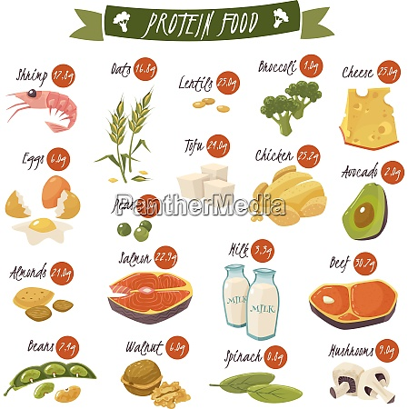 best protein food icons collection for
