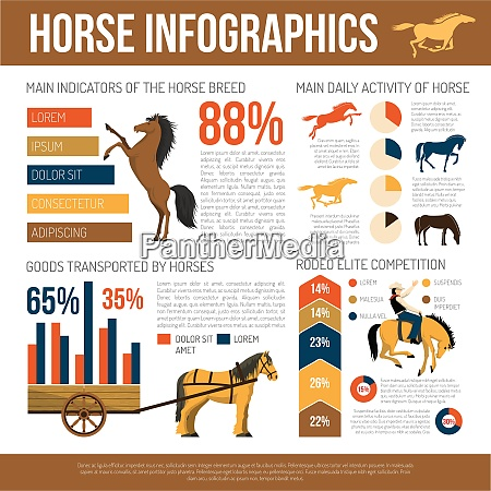 popular horse breeds infographic poster with