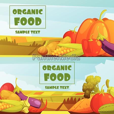 organic grown farmer vegetables two horizontal