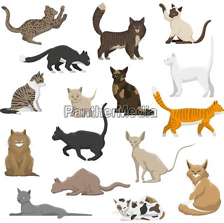 domestic popular and rare exotic cat