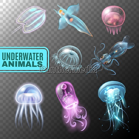 beautiful realistic and colored underwater transparent