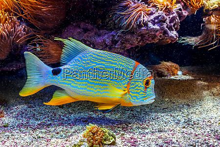 colorful exotic fish in aquarium