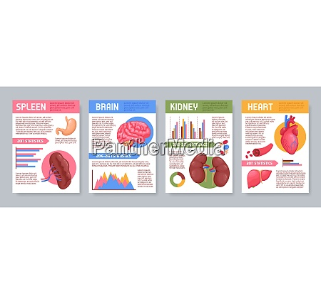 set of posters with human internal