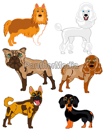 vector illustration of the dogs of