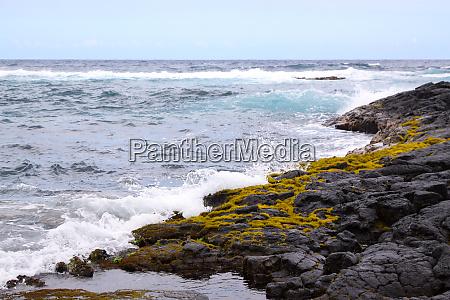 lava coast moss