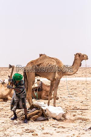 camel caravan and afar mining salt