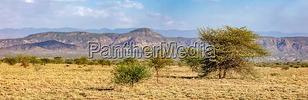 savanna in the awash national park