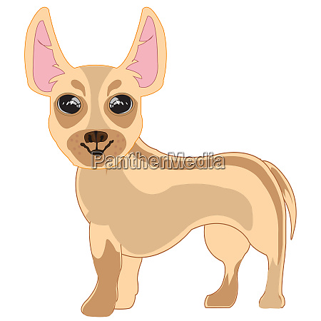 vector illustration of the small dog