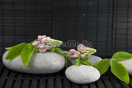 zen flower still life with pebble