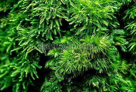 macro shot detail of mosses cover