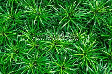 closeup of green leaves texture background