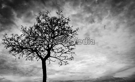 silhouette dead tree and branch on
