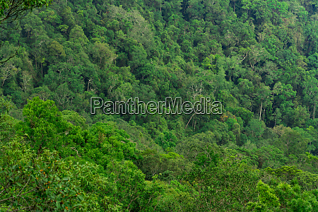 beautiful tropical forest background ecosystem and