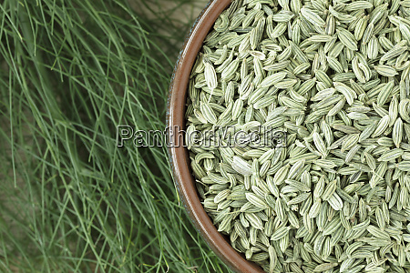 fennel seeds with fennel plant
