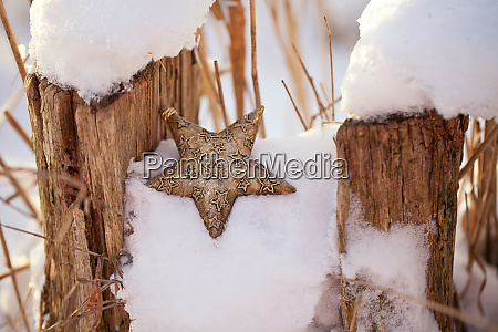 golden christmas star ornament in the