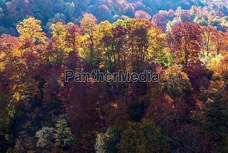 sunset forest autumn akita japan