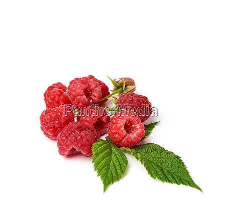 bunch of red ripe raspberries and