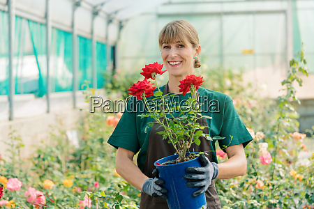 gardener woman showing rose into the