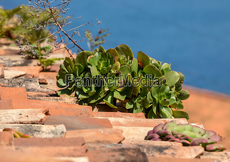 miniature succulent plants growing on an