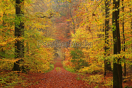 autumnal forest kastel staadt rhineland palatinate