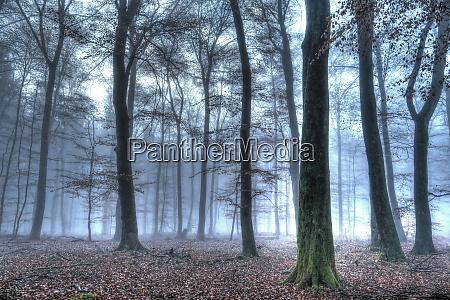 autumnal forest rhineland palatinate rheinland pfalz