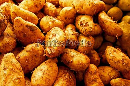 dirt potato