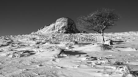 hawthorn and haytor rocks in snow