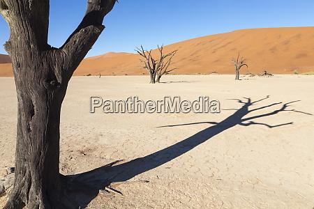dead vlei namib desert namibia africa