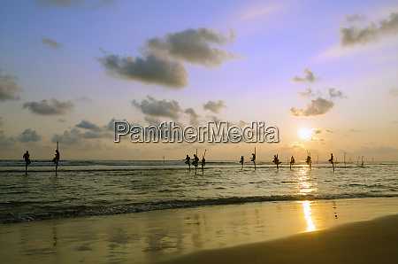 stilt fishermen dalawella sri lanka indian