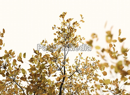 autumn tree treetop close view