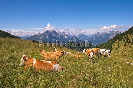 small herd of cows grazing on