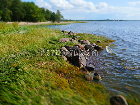 picturesque lake shore in summer