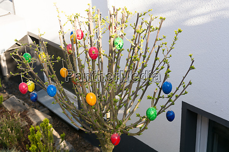 colored easter eggs on willow
