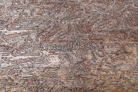 abstract pattern in wood caused by