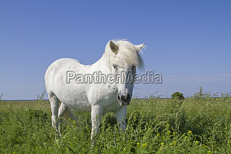 white horse in the nature reserve