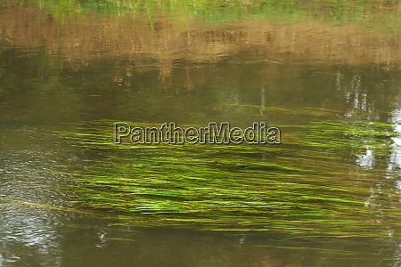 grasses in the creek