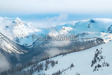 winter fir trees in mountains