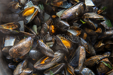closeup of mussels in cooking pot