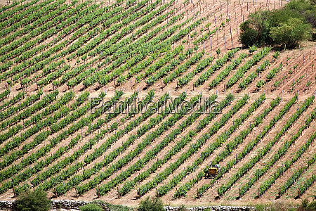winery finca tacuil in calchaqui valley