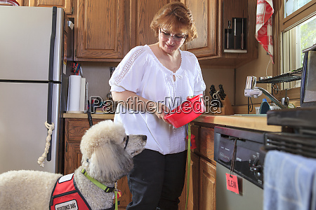 poodle service dog with his master