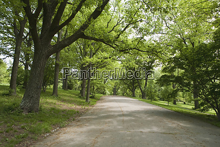 trees at the roadside arnold arboretum