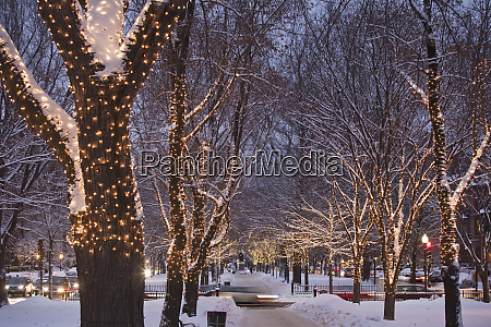decorated trees along an avenue in