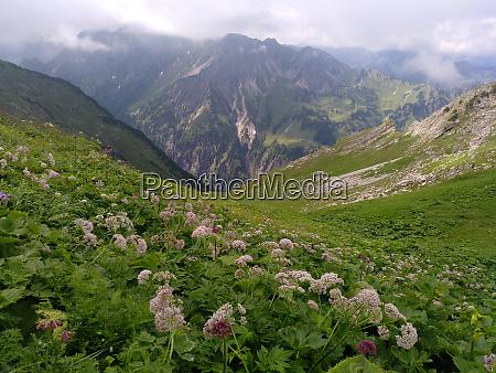 germany bavaria allgaeu alps hiking