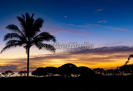 sunrise and silhouetted palm tree along