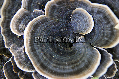 unusual beautiful and rare decorative mushroom