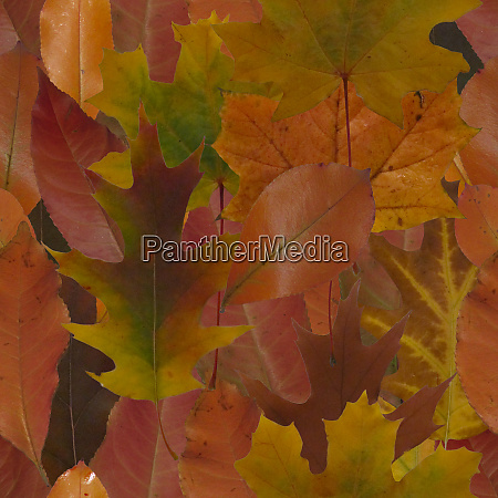 abstract autumn leaves seamless pattern
