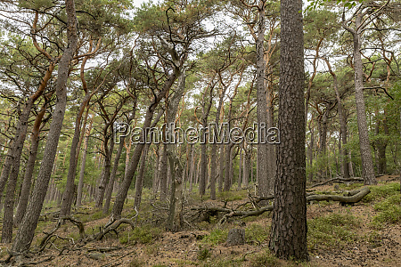 view over a wooded valley with